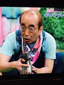 志村さんとイタグレ